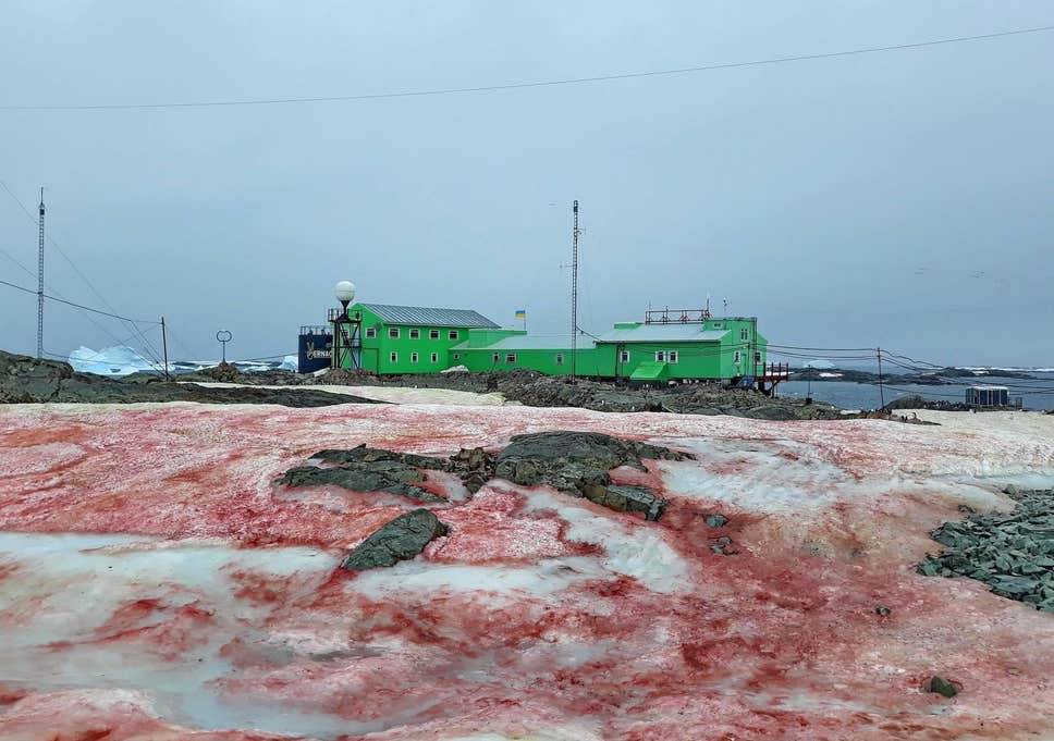 blood-red-snow-in-antarctica-is-the-work-of-…-algae
