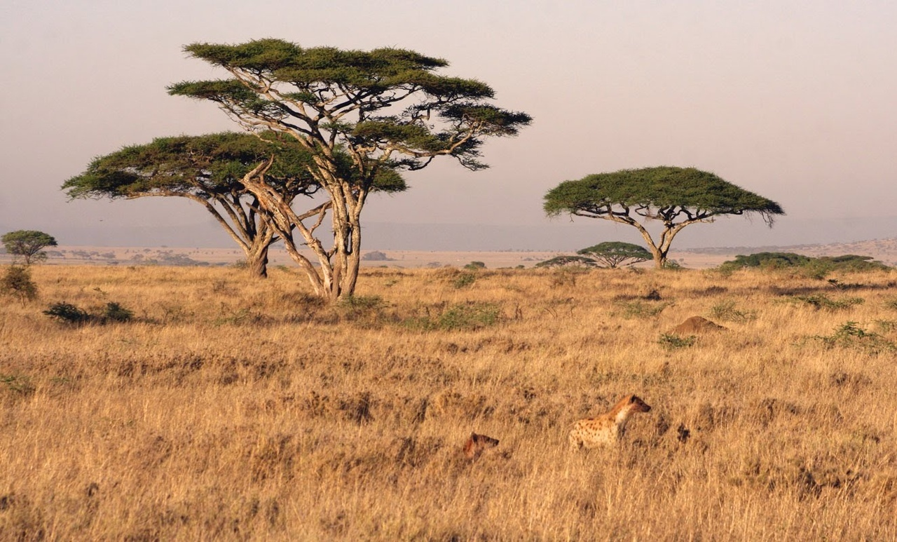 ecosystems-of-africa