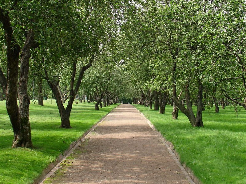 in-the-tula-region-allowed-to-walk-in-the-parks