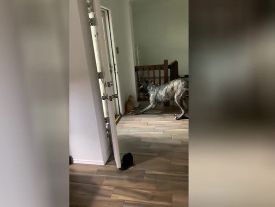 sly-cat-found-a-way-to-get-rid-of-dog-harassment