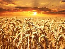 """""""there-is-a-six-month-supply.""""-shmygal-commented-on-the-export-of-grain-from-ukraine"""
