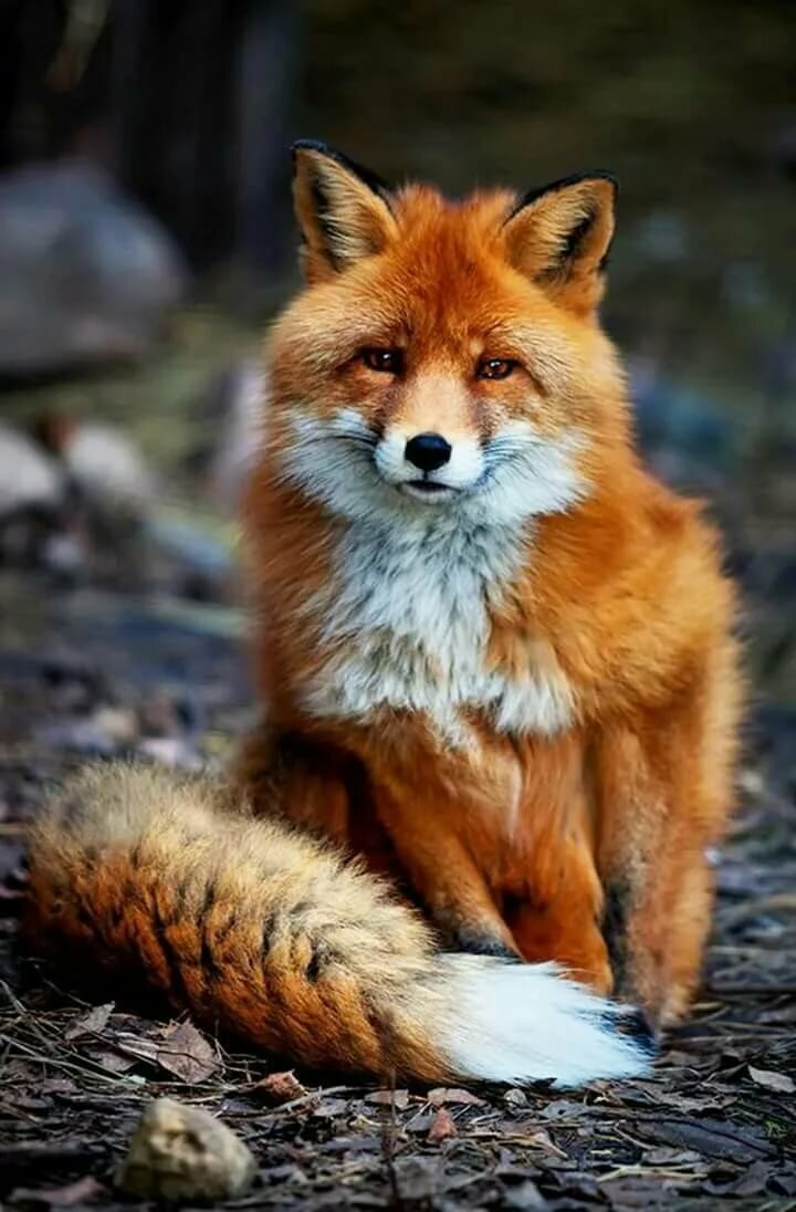 45-interesting-facts-about-foxes:-their-life-in-nature,-dexterity-and-their-unique-abilities