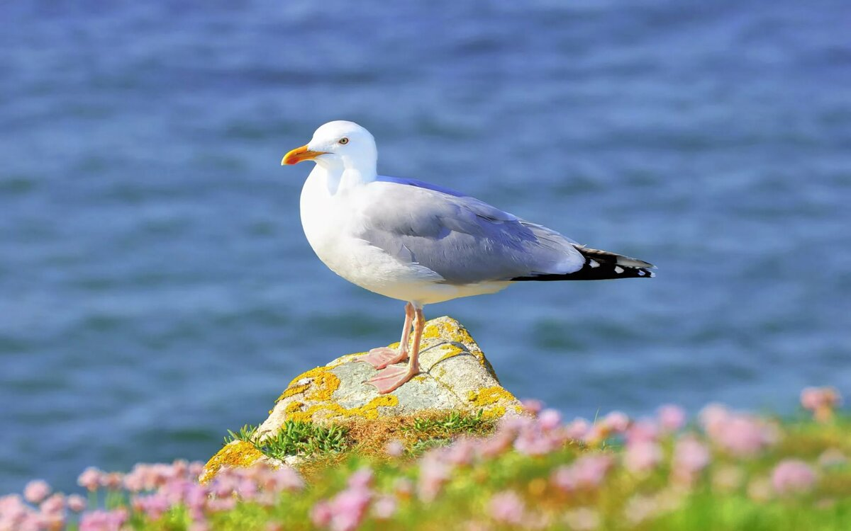 30-interesting-facts-about-gulls:-cannibalism-and-unusual-body-structure