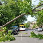 in-odessa,-a-huge-branch-fell-on-cars-and-damaged-electric-vehicle-wires