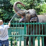 in-odessa,-the-zoo-decided-to-quarantine-on-may-15