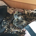 in-kiev,-pigeons-chose-a-student's-room-while-he-was-at-home-due-to-quarantine