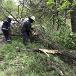 strong-wind-in-ukraine-fell-trees-on-roads,-cars-and-wires