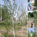 dnipro-residents-admire-a-boy-who-took-care-of-all-the-trees-in-his-area