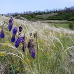 the-gray-sea-of-​​feather-grass-and-bright-flowers:-a-biologist-showed-the-natural-beauty-of-the-zaporozhye-beam