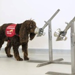 uk-government-sends-dogs-to-fight-against-coronavirus