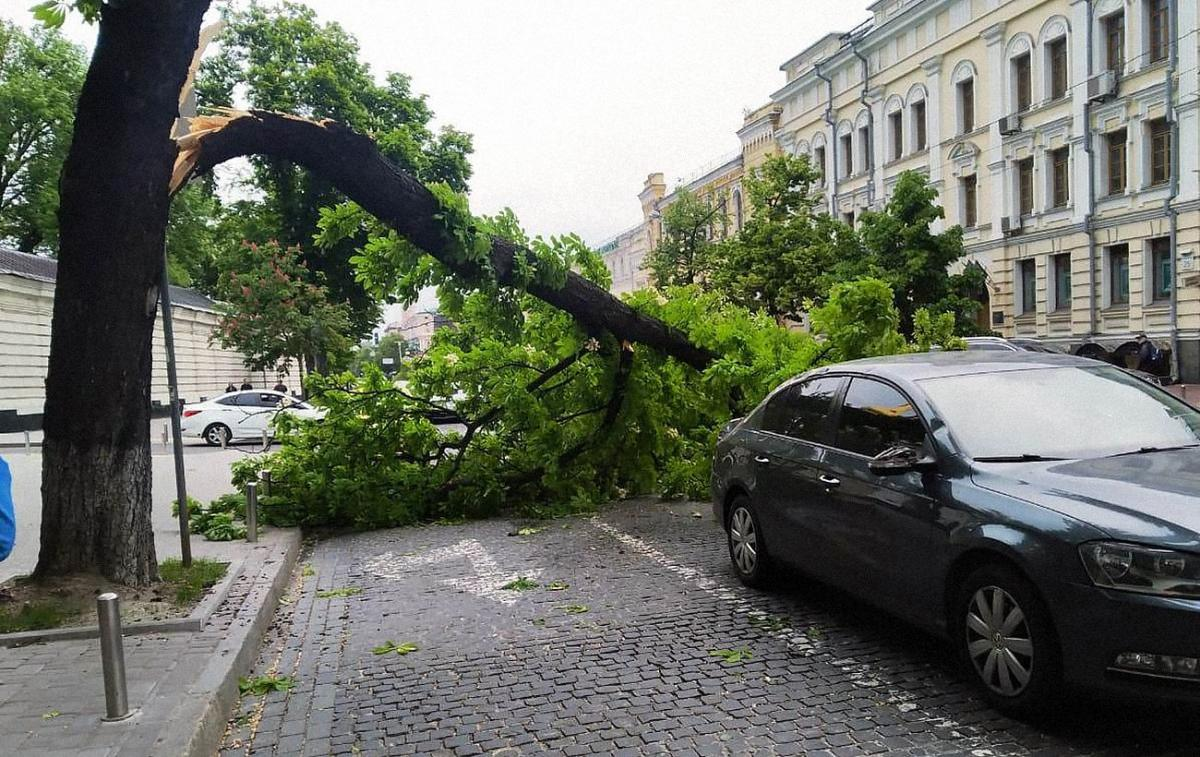 strong-wind-was-raging-in-kiev-–-photo-of-consequences