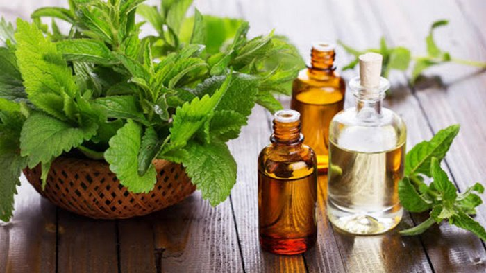 A primitive remedy relieves migraines and abdominal pain