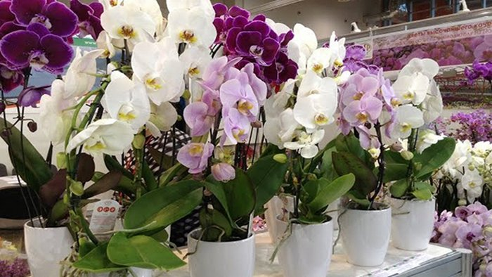 How to care for an orchid after purchase