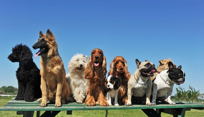 Ranking of the most easily trained dog breeds
