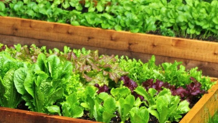 How to choose greens for your home garden